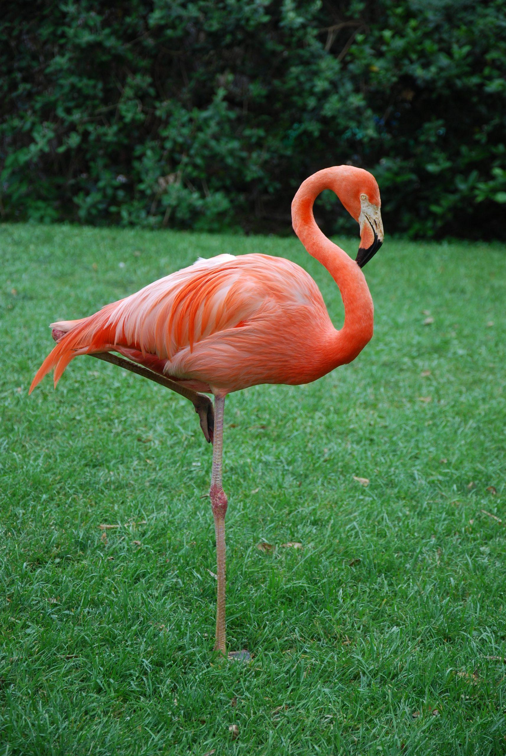 pink flamingo florida